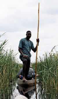 Närmast ljudlöst glider vi fram i skydd av Okovangodeltats vass .