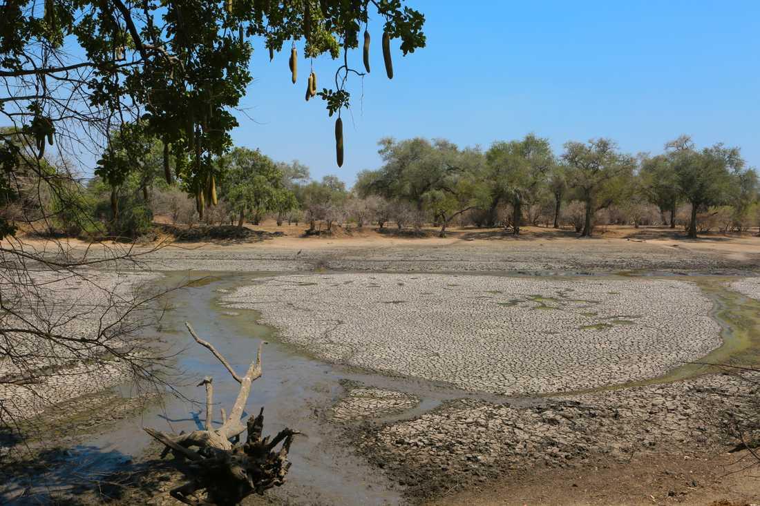 Omkring 45 miljoner människor står inför svår matbrist på grund av torkan i södra Afrika, varnar FN. Bilden är från en uttorkad vattenkälla i Zimbabwe. Arkivbild.