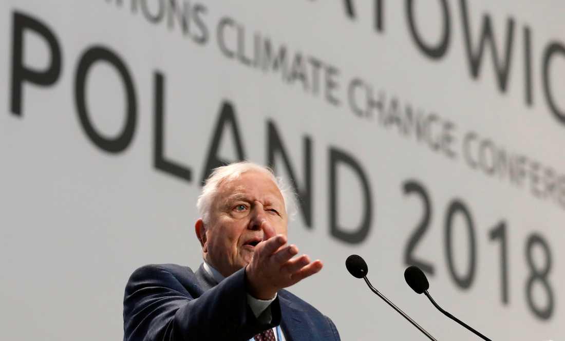 """Sir David Attenborough höll ett brandtal under FN:s klimatmöte i Polen. """"Om vi inte agerar kommer vår civilisation att kollapsa"""", sa han."""