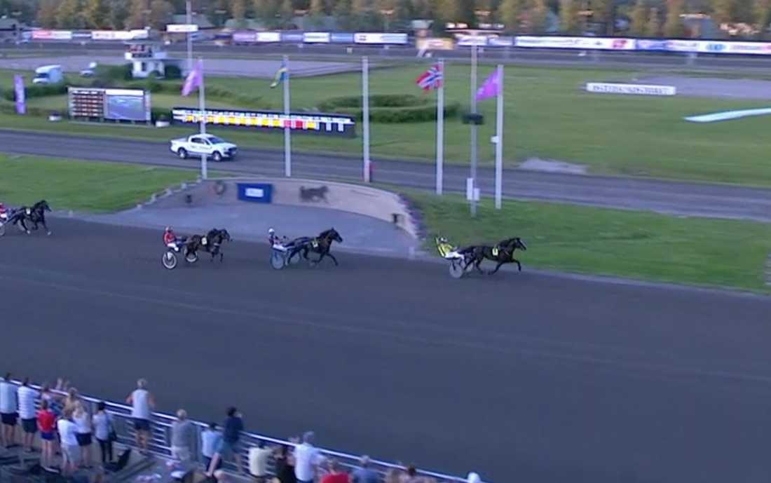 Öystein Tjomsland och Nordsjö Odin vann Svenskt Kallblodsderby