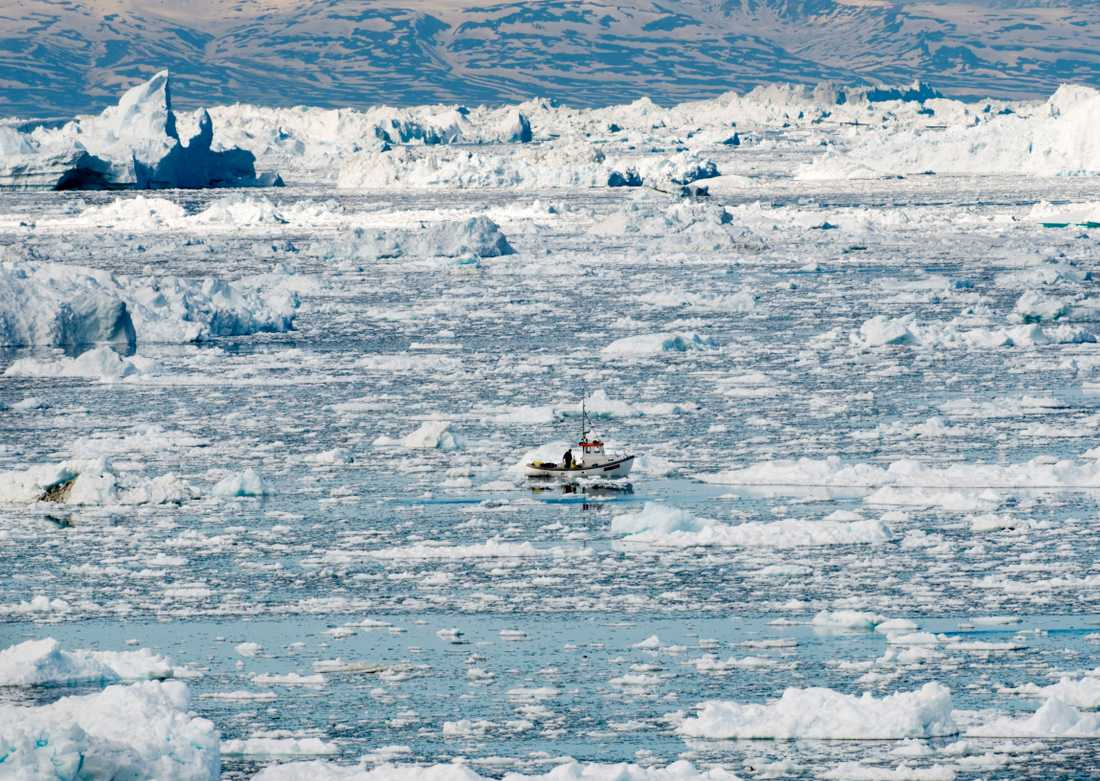 En liten fiskebåt bland isflaken utanför den nordgrönländska staden Ilulissat där det bor 5000 människor och cirka 4000 slädhundar.