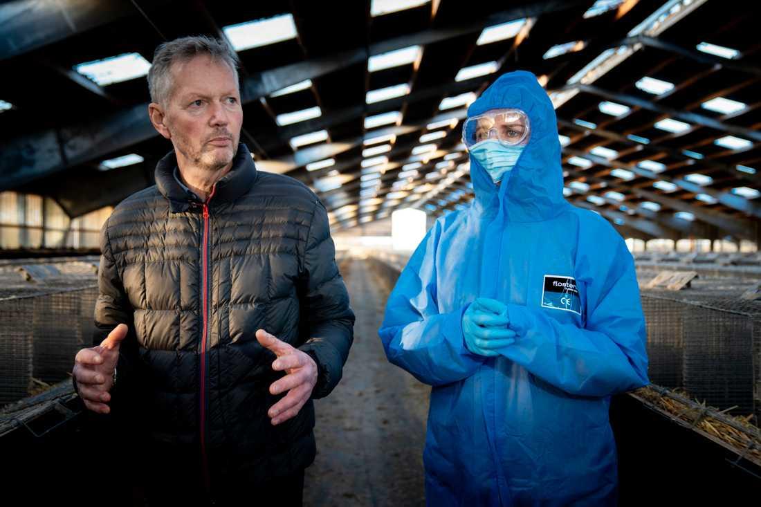 Minkuppfödaren Peter Hindbo hade ingen virussmitta bland sina djur, men statsminister Mette Frederiksen tar det säkra före det osäkra.