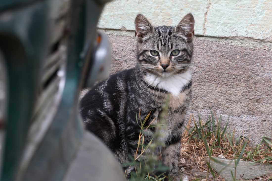 Hemlös kattunge på en bilverkstad.