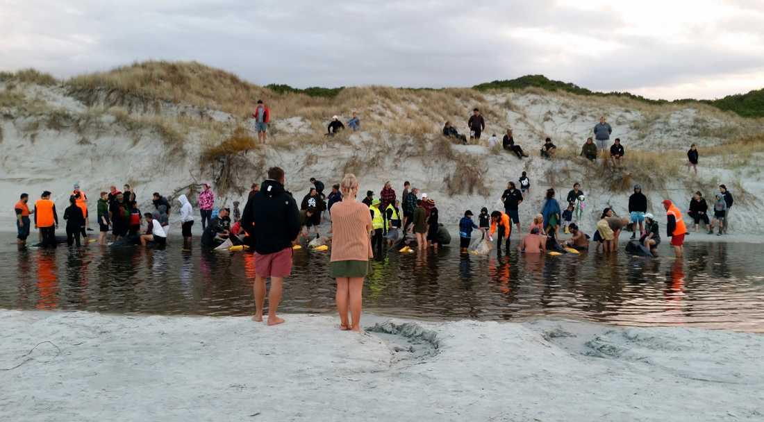 Man lyckades under tisdagen rädda sex dvärgspäckhuggare som strandat.