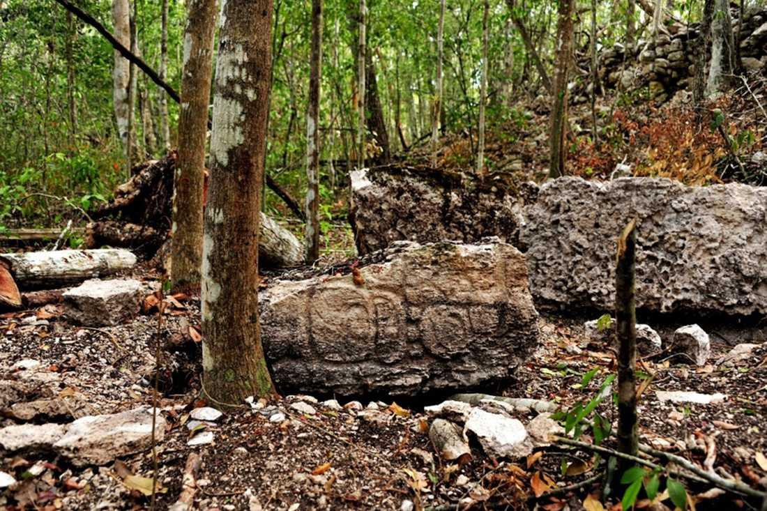 Tre veckor tog det för forskarteamet bara att hugga sig fram till staden genom den täta djungeln.
