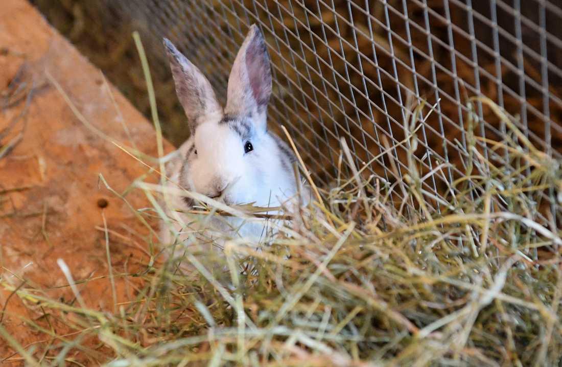 Två ungdomar misstänks ha skjutit flera vilda kaniner med kolsyrevapen. OBS: Arkivbild.
