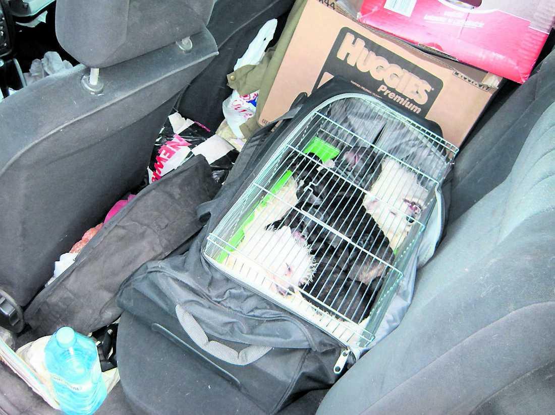 ensamma i timmar Flera av hundarna var i mycket dåligt skick och hade sannolikt varit utan tillsyn i tio timmar.
