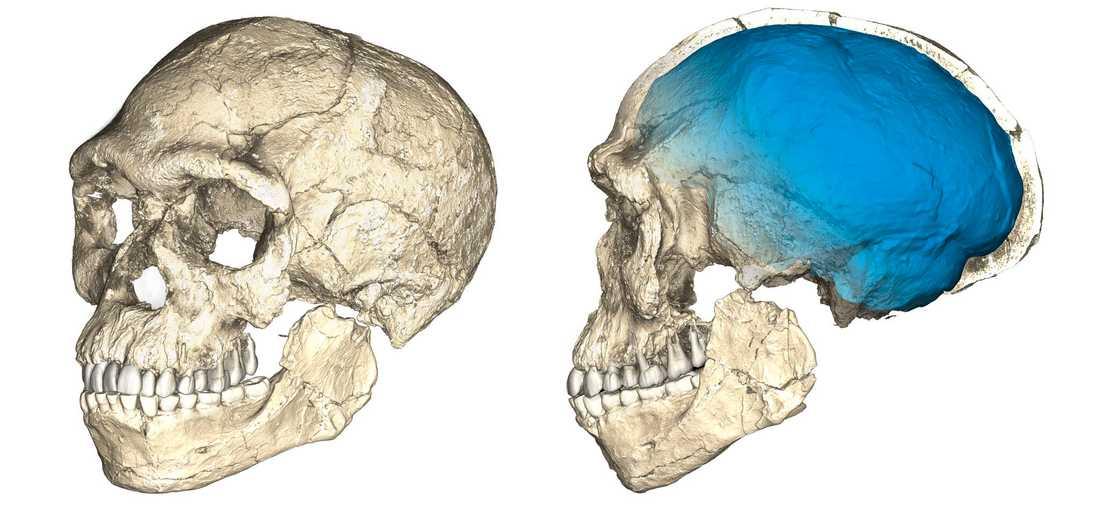 Rekonstruktionerna visar de nya fynden som hittades i Marocko.