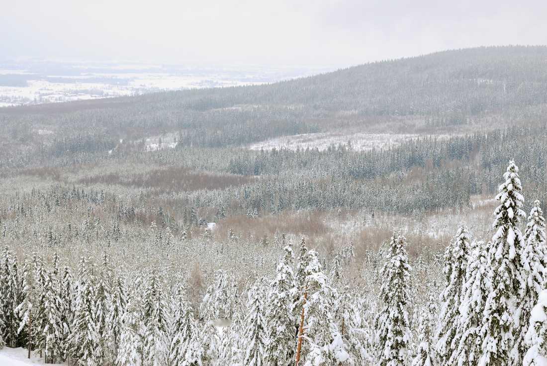 Skogsstyrelsenstoppar skyddetav skogen