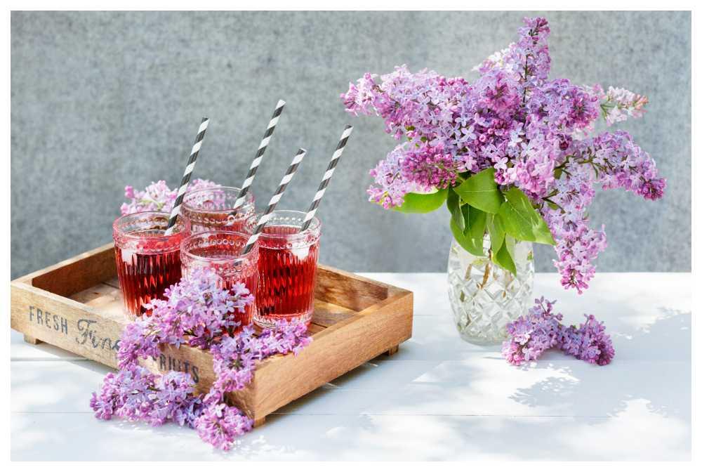Med några enkla knep står sig syrenbuketten längre och du slipper slokande blomklasar.