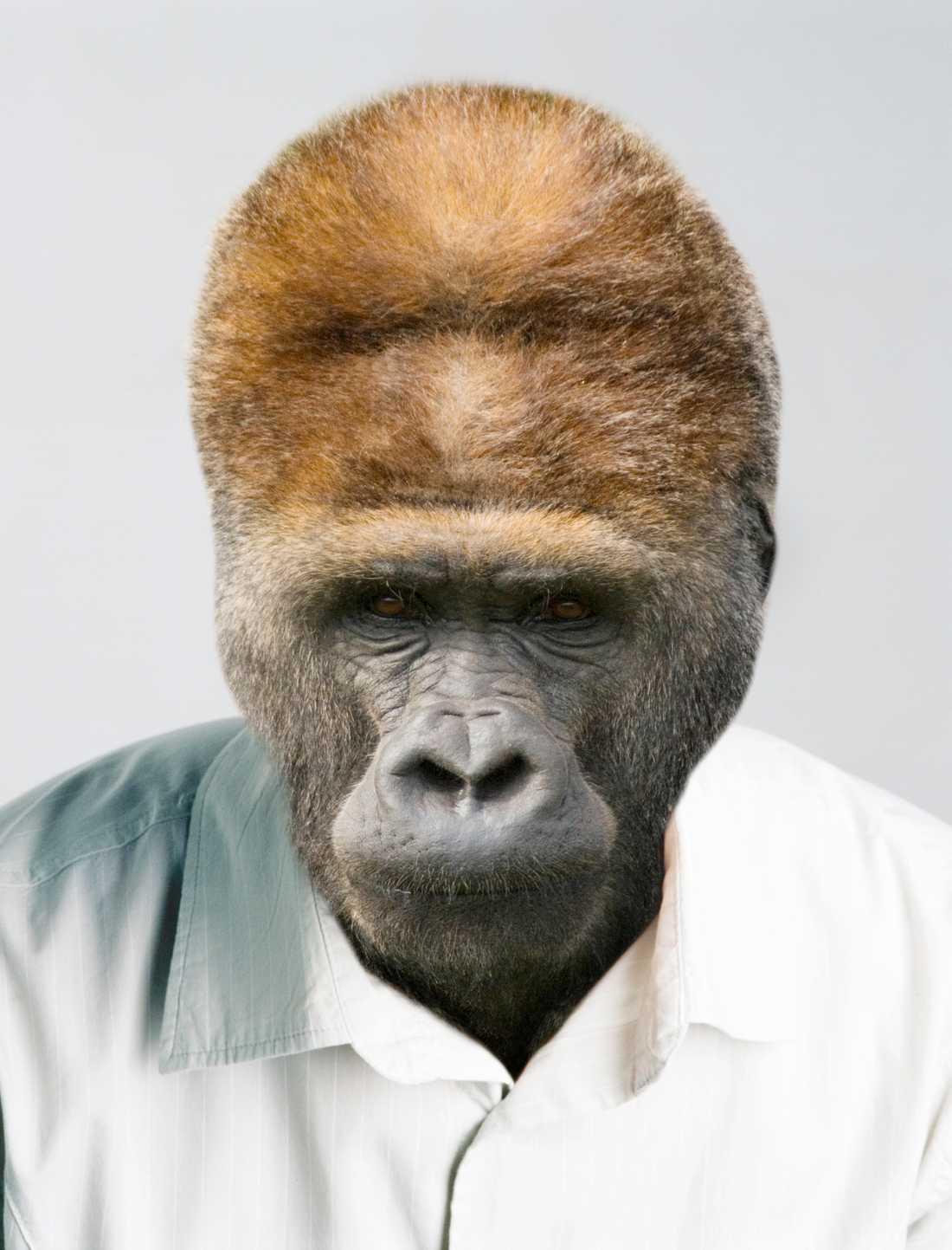 """Apmonster? """"Att göra djur för mänskliga kan innebära att vi skapar monster"""", menar forskarna."""