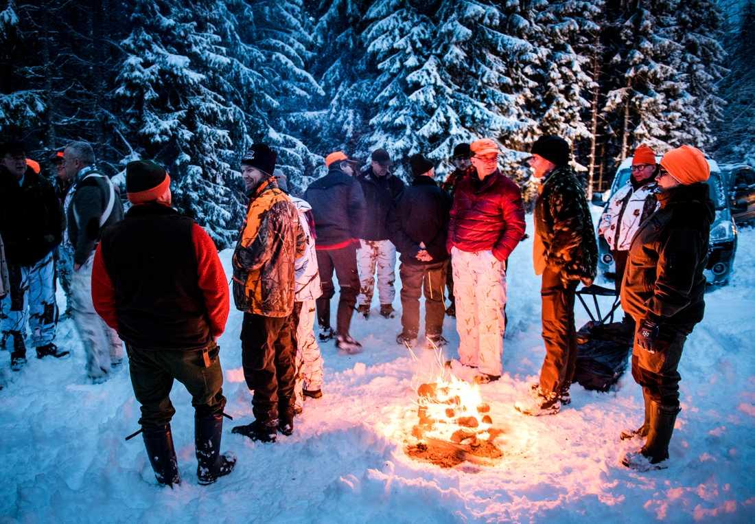 """En del tycker att vargen inte borde få finnas alls i svenska skogar. """"Det skulle bli lugn och ro inte bara för djuren i skogen, utan även för får och hundar"""" säger en man."""