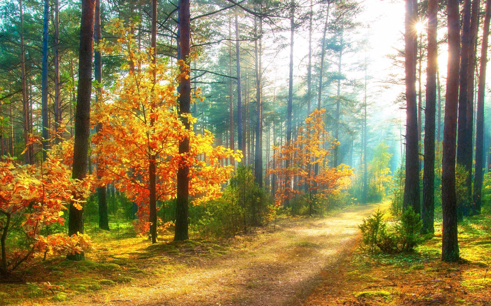 Naturen i Järnbärarleden, bland Sveriges vackraste
