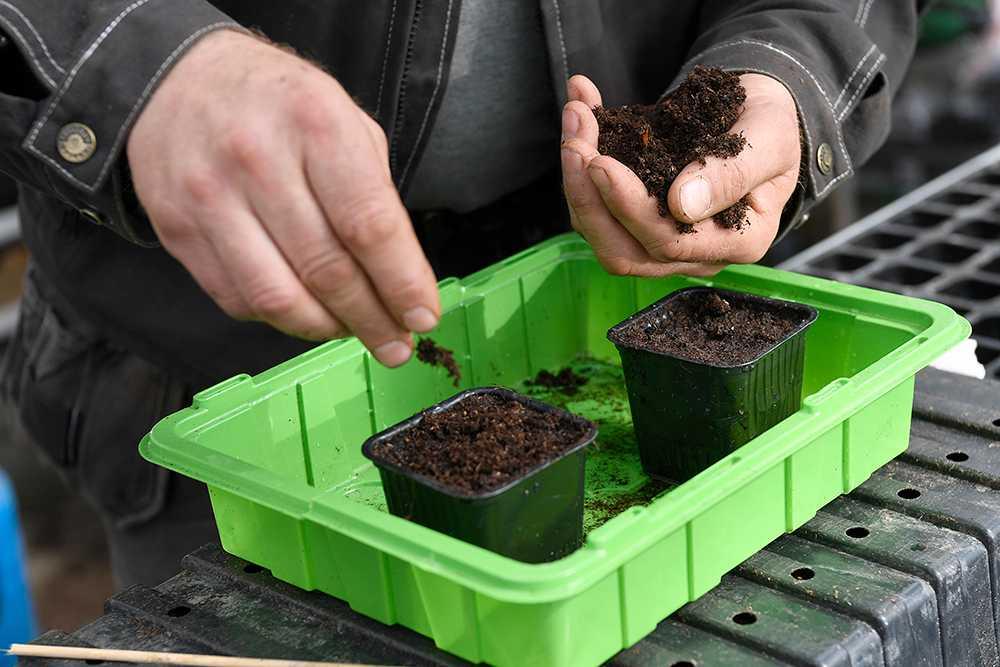Täck fröna med ett tunt lager jord och vattna.
