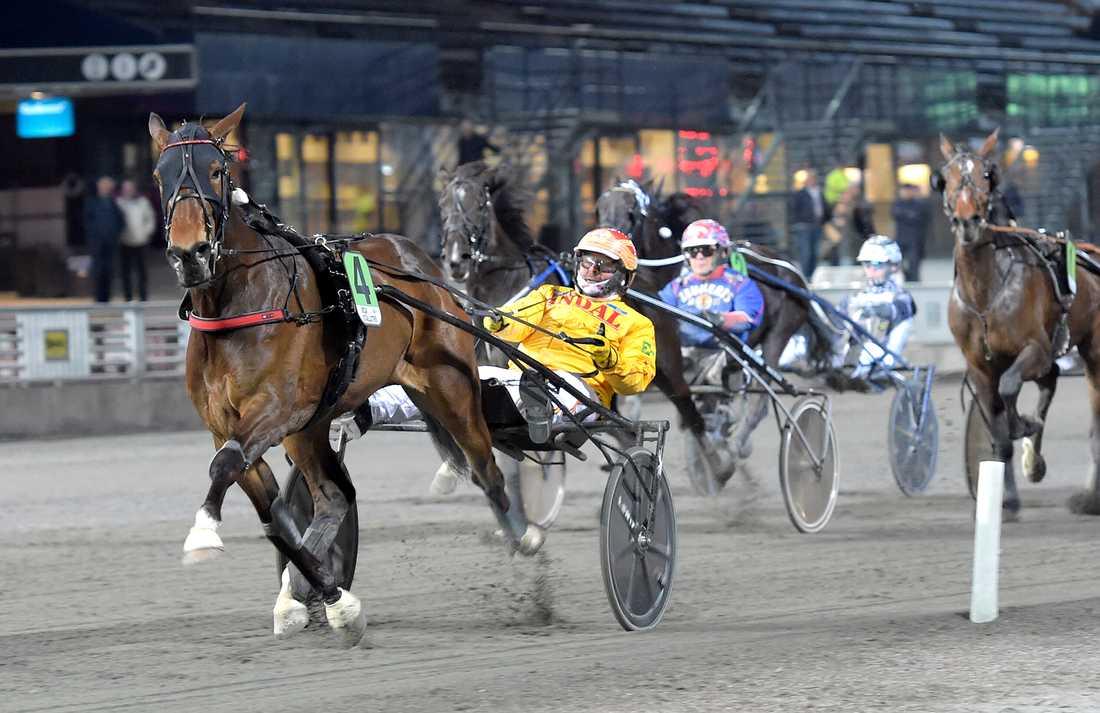 Zanzibar Wise As är en av två Gocciadoro-hästar som ska starta på lördag i Sverige.