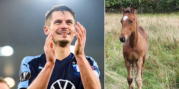 Markus Rosenberg och hästen Supermackan han fått uppkallad efter sig