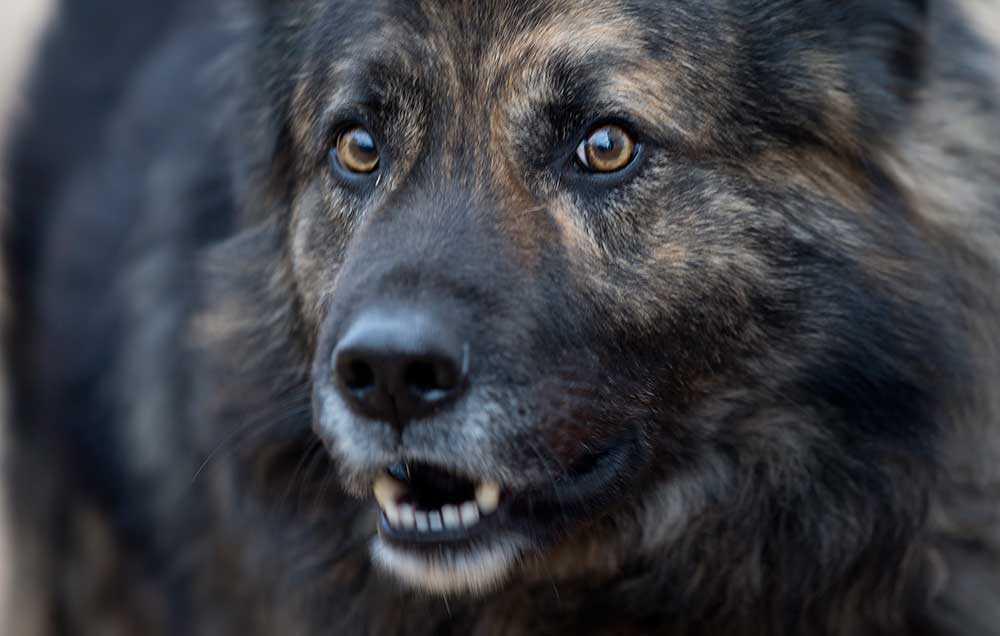 Medo Blandrashunden har belagts med munkavle av en domstol.