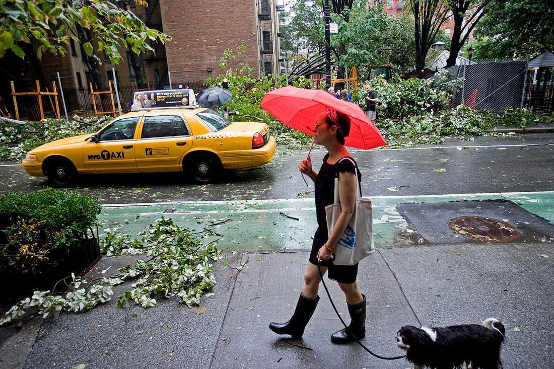 Manhattan, New York: Livet börjar återgå till det normala efter att stormen dragit förbi. Ett par träd har blåst omkull.