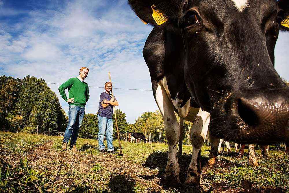 """Gustav Fridolin besökte i går Björksättra gård i Huddinge och samtidigt som han lovade guld och gröna skogar åt bönderna gav han C en smocka. """"Regeringen som de sitter i har drivit en politik som gynnat innerstäderna på landsbygdens bekostnad""""."""