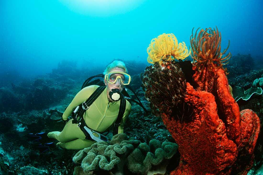 Raja Ampat i östligaste Indonesien har fler sorters koraller, fiskar och undervattensdjur än någon annan plats i världen.