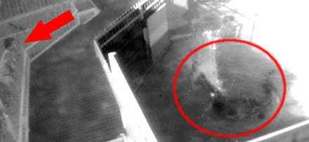 Här har övervakningskamerorna fångat när pojken slänger ner djuren till krokodilen Terry.