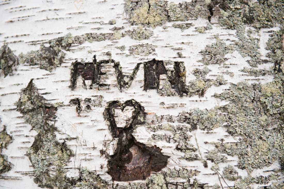 På en björk står namnet Kevin inristat. Platsen där ett barn mördades för tjugo år sedan.