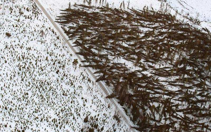 Skogsområde i Hassela – efter stormen Dagmars framfart.