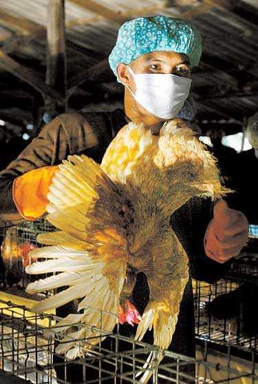 RENSNING Thailändsk militär sanerar en fågelfarm efter ett utbrott av fågelinfluensa.