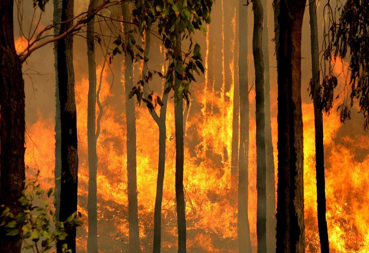 En skogbrand brinner utom kontroll i Kiewa Valley, nära staden Dederang i nordöstra Victoria.
