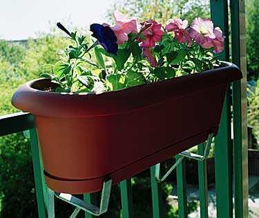 Blir det frostnätter - skydda växterna med en filt eller bubbelplast råder trädgårdsexperten.