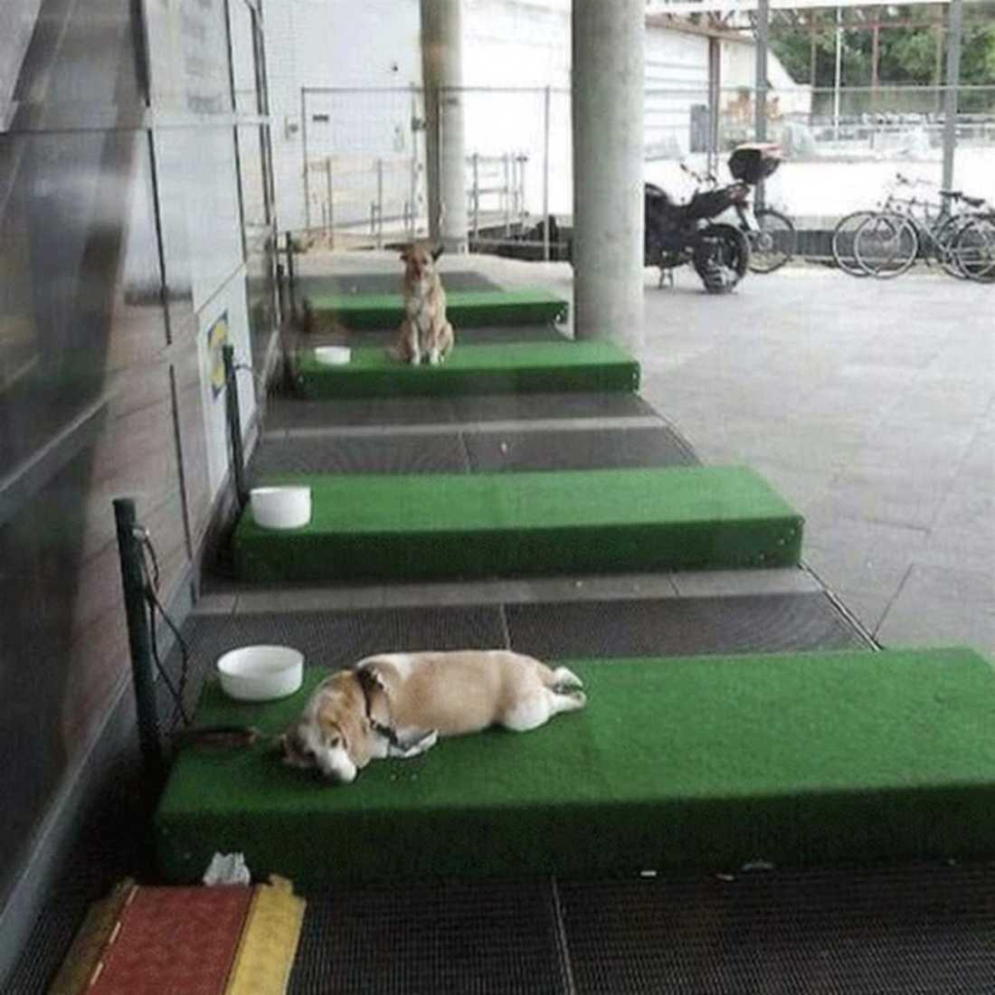 Hundarna verkar gilla den nya parkeringen.