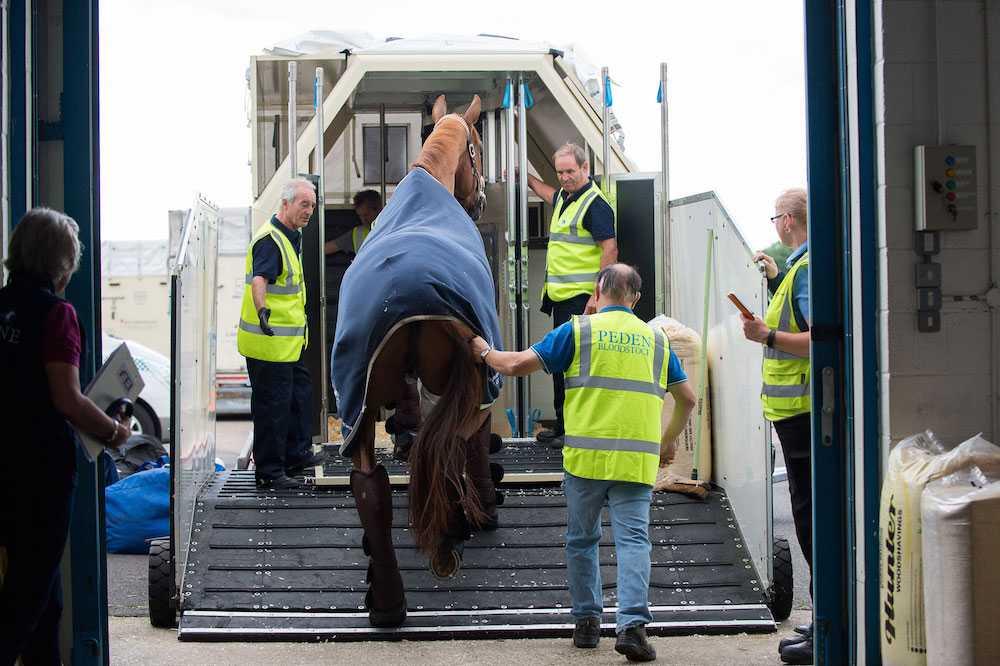 Den första gruppen hästar, 34 från tio nationer, flög på fredagen från London Stanstead med Emirates SkyCargo Boeing 777-F. Alla svenska hästar flyger från Liege i Belgien.