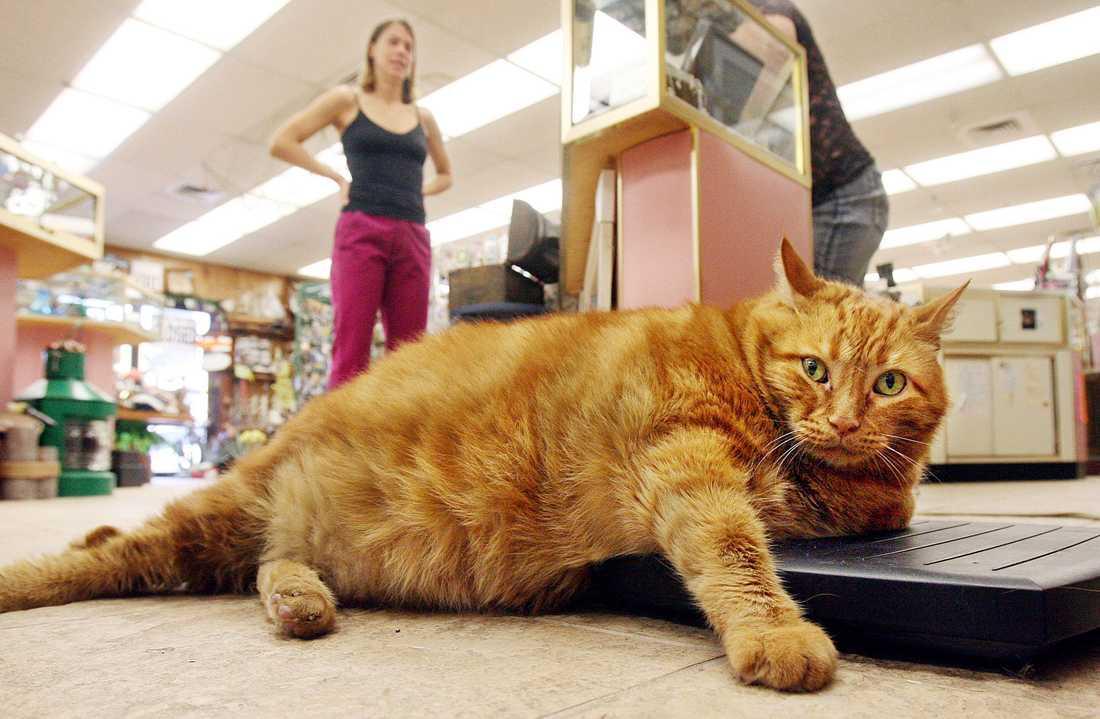 katt går ner i vikt