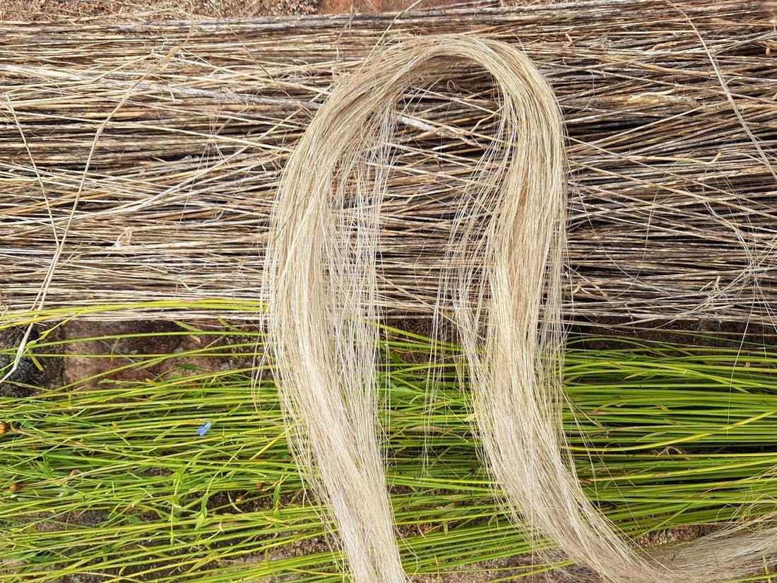 Lin är en slitstark fiber med långt liv, men utgör bara en liten del av världens textilproduktion.
