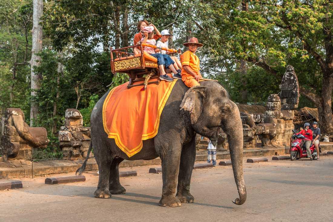 Turister rider på en elefant vid Angkor Wat-templet i Kambodja.
