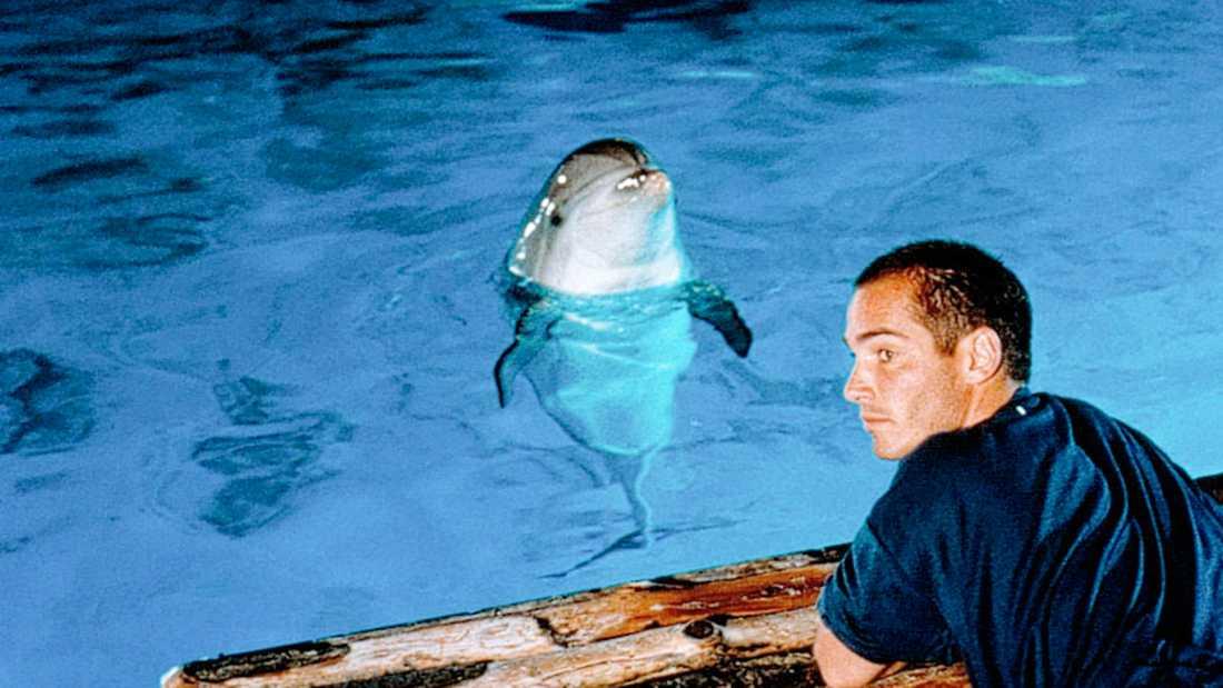 "Scen ur Luc Besson-filmen ""Det stora blå"" från 1988."