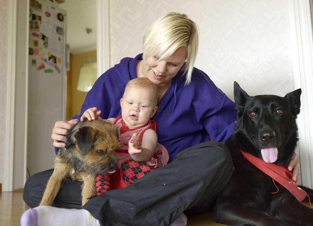 I vart tredje svenskt hem finns det husdjur. Oftast är det en hund eller katt.