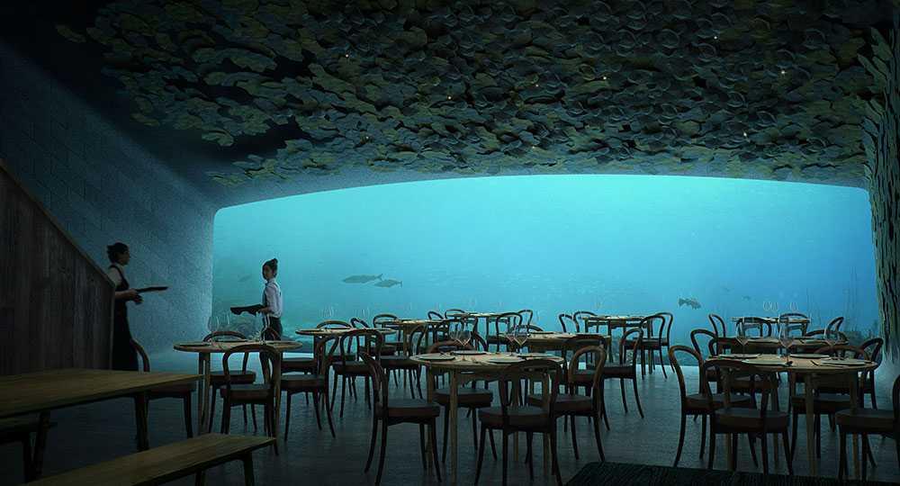 Matgästerna kan följa livet under vattenytan under tiden som de äter.