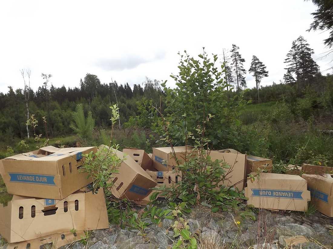 Dumpade kartonger som hittats i skogen.