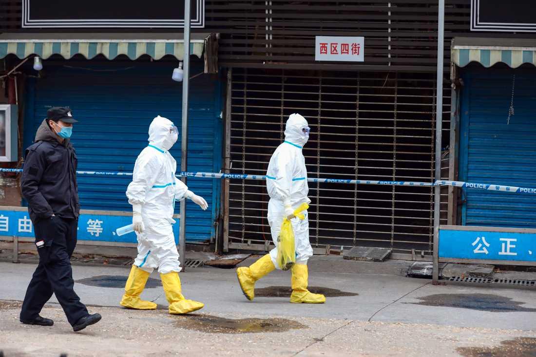 Personal fångade in en jättesalamander (i den gula plastpåsen) som tros ha smitit från den marknad i Wuhan varifrån viruset tros ha kommit.