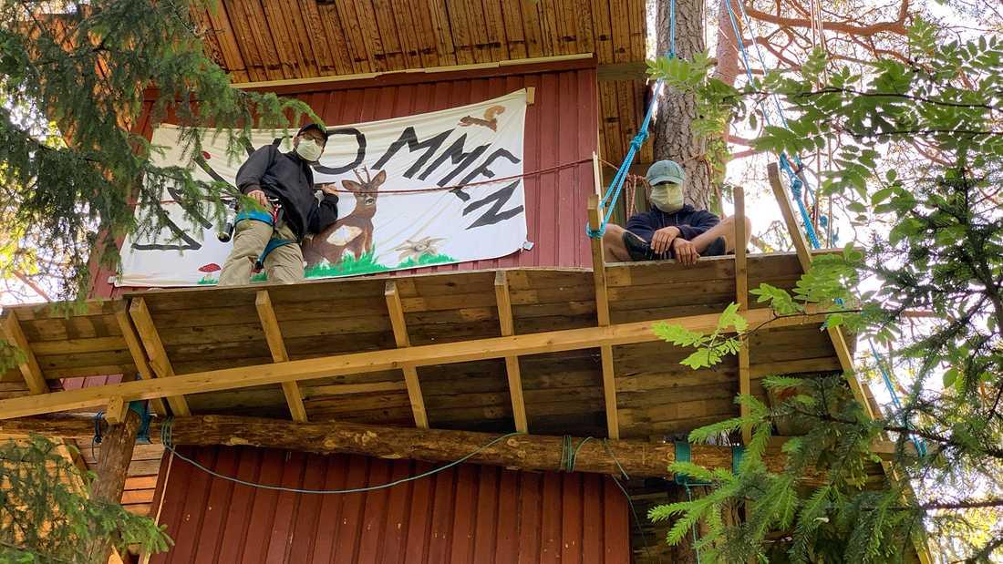 Uppsala kommun försökte riva trädkojan för två veckor sedan, men avbröt arbetet pågrund av aktivister.