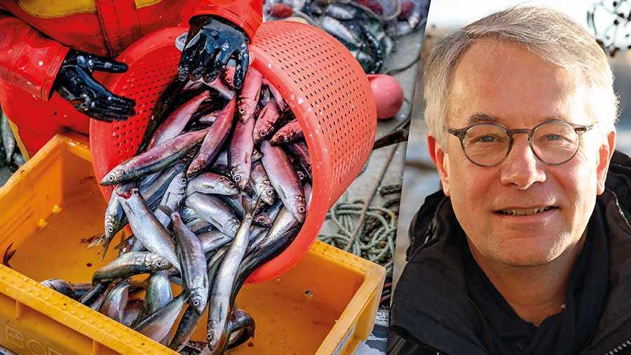 I stället för att gynna det småskaliga kustfisket fångas nästan hela den svenska strömmingskvoten av jättelika industritrålare. Först försvann torsken, inte kan vi väl låta kustens strömming försvinna också? skriver  Sten Frohm.