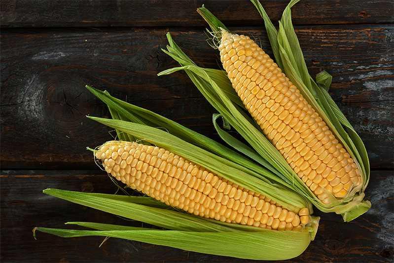 Tips! Majsstärkelse kan användas som glutenfritt alternativ för att reda exempelvis soppor och såser. Majsstärkelse kallas för maizena.
