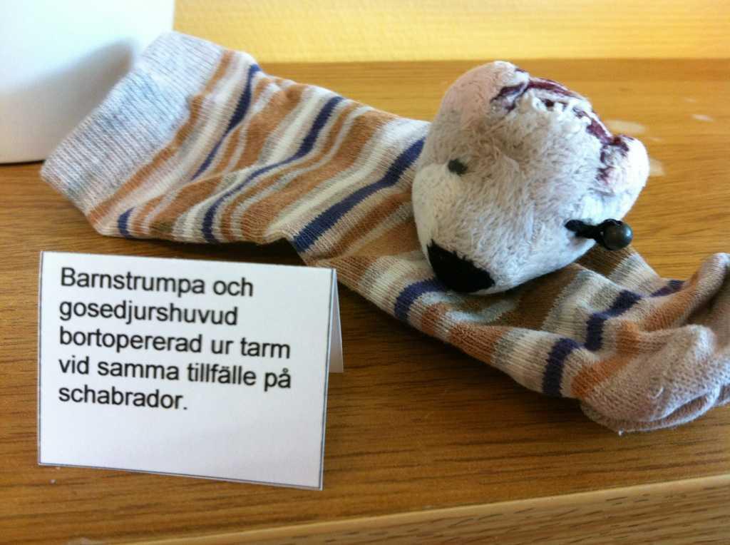 Hundar gillar att tugga på strumpor och underkläder. Bild på strumpa och del av gosedjur som en hund har fått i sig.