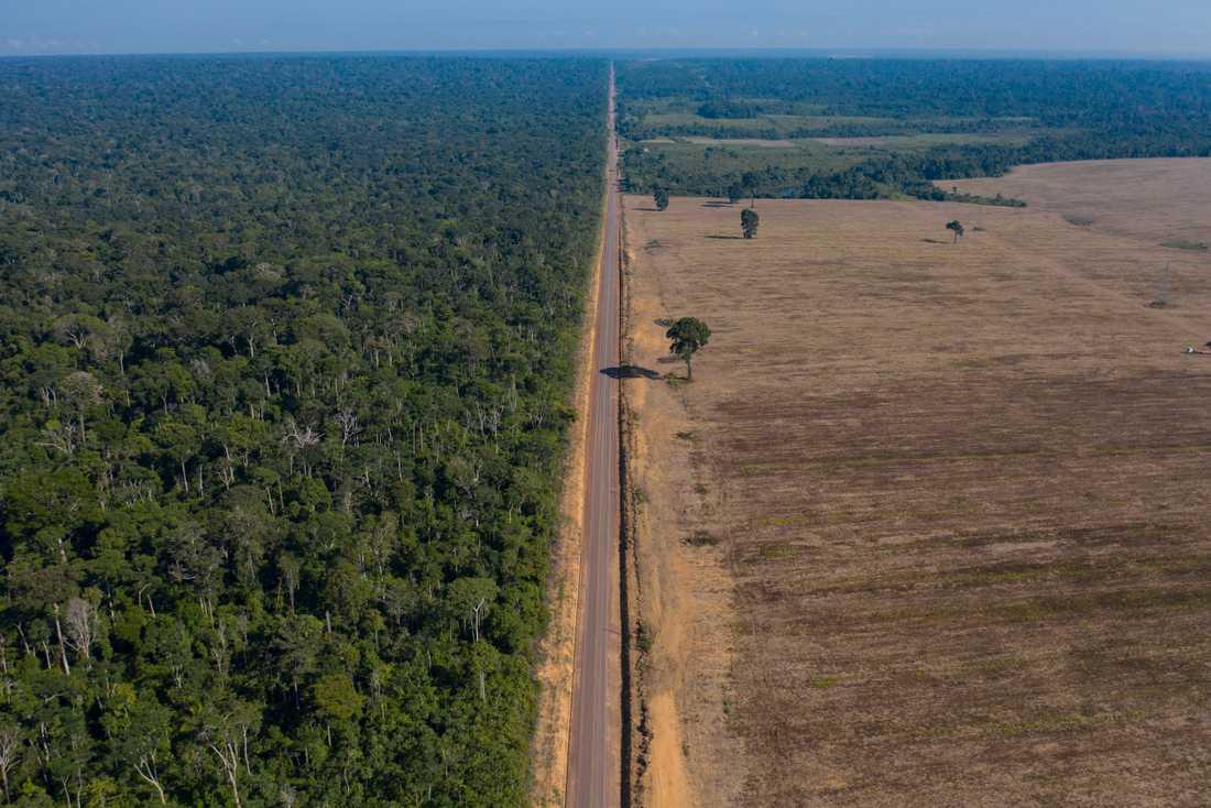 Sojaodling på tidigare skogsmark i Brasilien. Arkivbild.