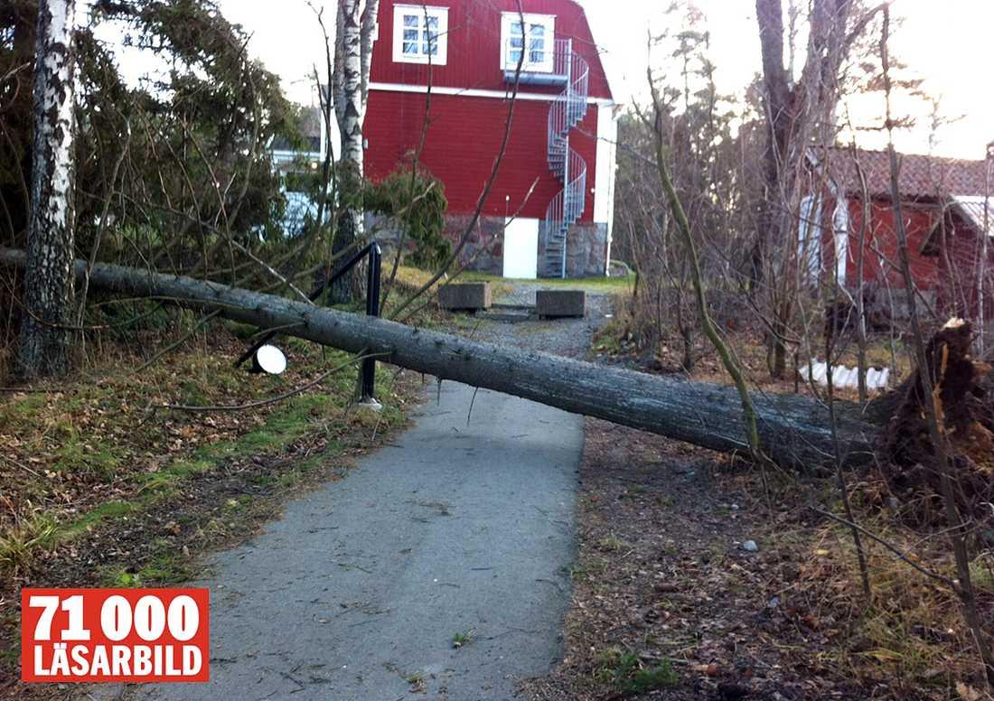 Träd har fallit framför Stäketskolan i Järfälla.