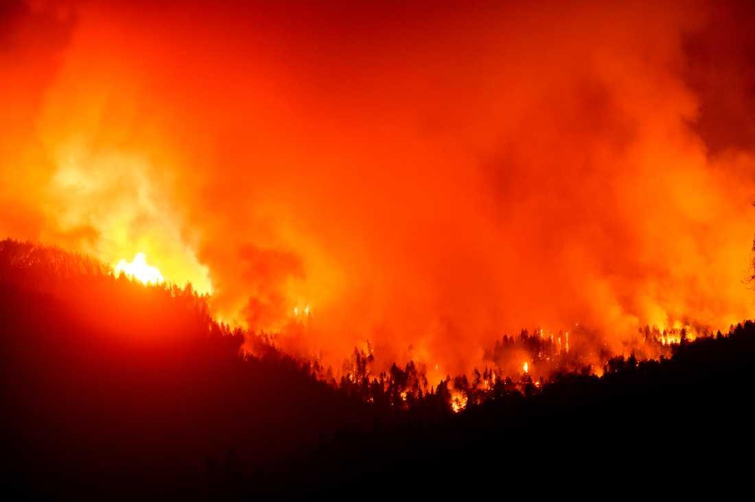 Bränderna i västra USA har härjat nästan två miljoner hektar mark. Arkivbild.