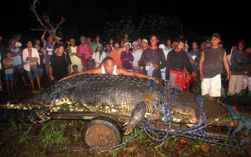 1 000 kilo Monsterkrokodilen är en riktig baddare.