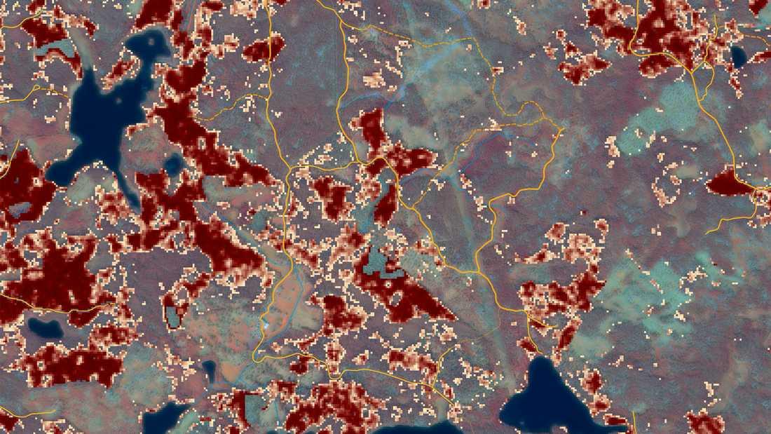 Skogsstyrelsens riksindexkarta som visar vilka områden som är i riskzonen.