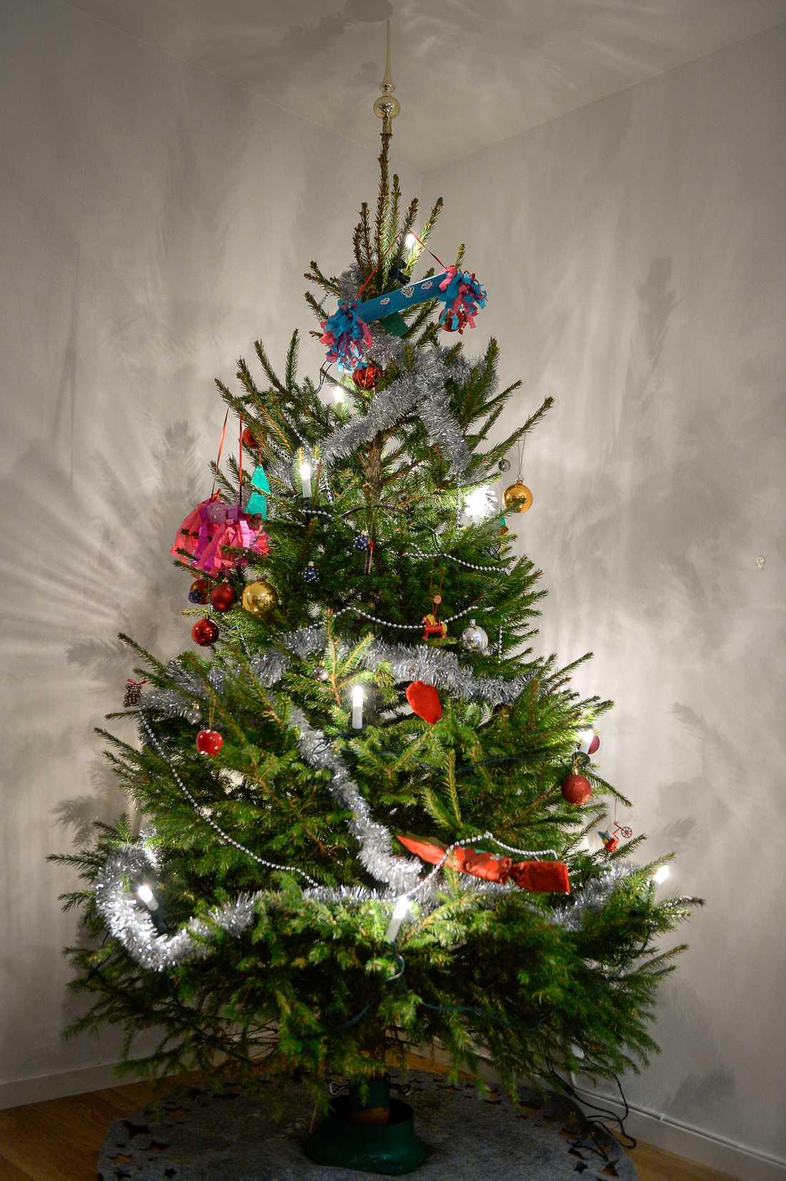 Sommarens torka har gjort årets julgranar grönare än vanligt, men julgransbrist väntar framöver.